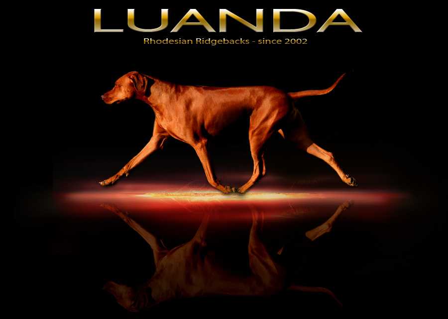 Welcome to LUANDA Rhodesian Ridgebacks -just CLICK!