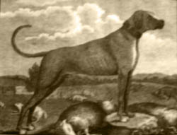 Lion Dog of18 century