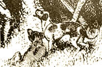 Ridged European dog by Baldwin 1858