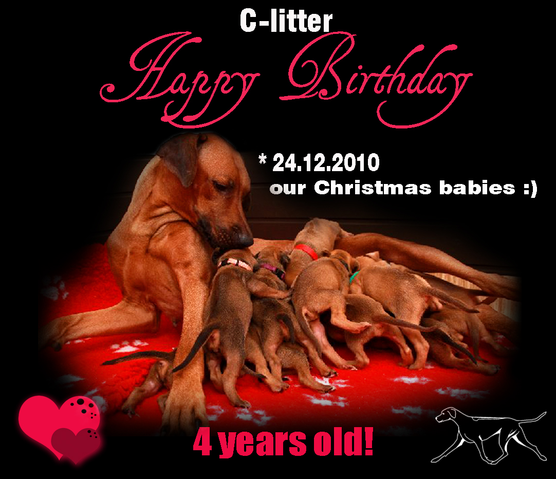 c-litter-Happy-birthday-4yrs copy