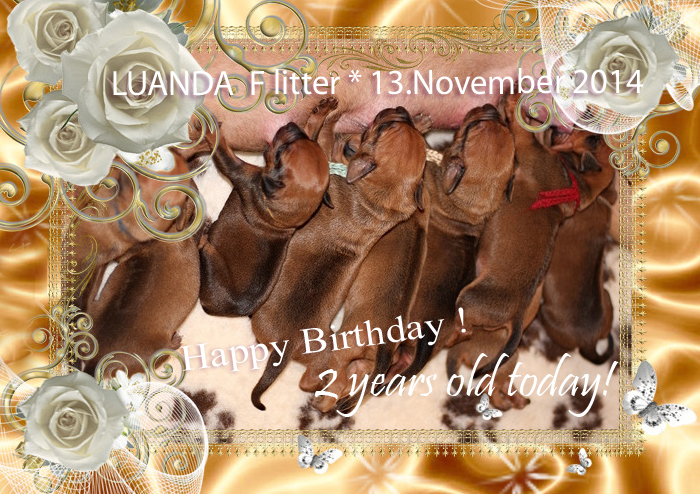 F litter 2years old HBday